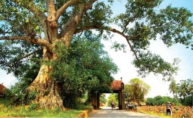 Để du lịch làng cổ đường lâm phát triển